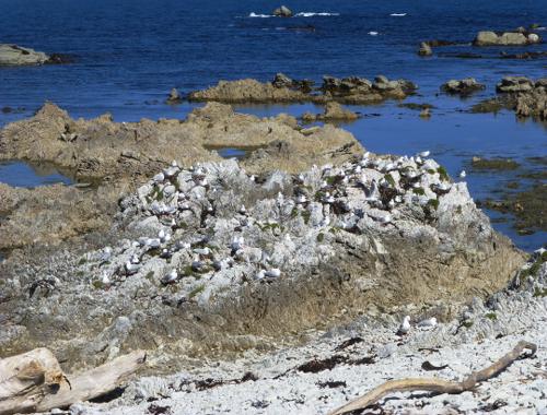 Kaikoura, Point Kean Seal-Colony 9