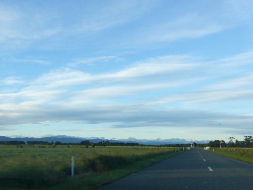 Blenheim, Neuseeland, Weinfelder