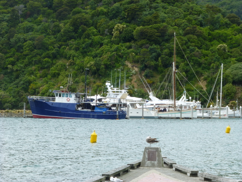 Picton NZ. Parkplatz am Hafen 5
