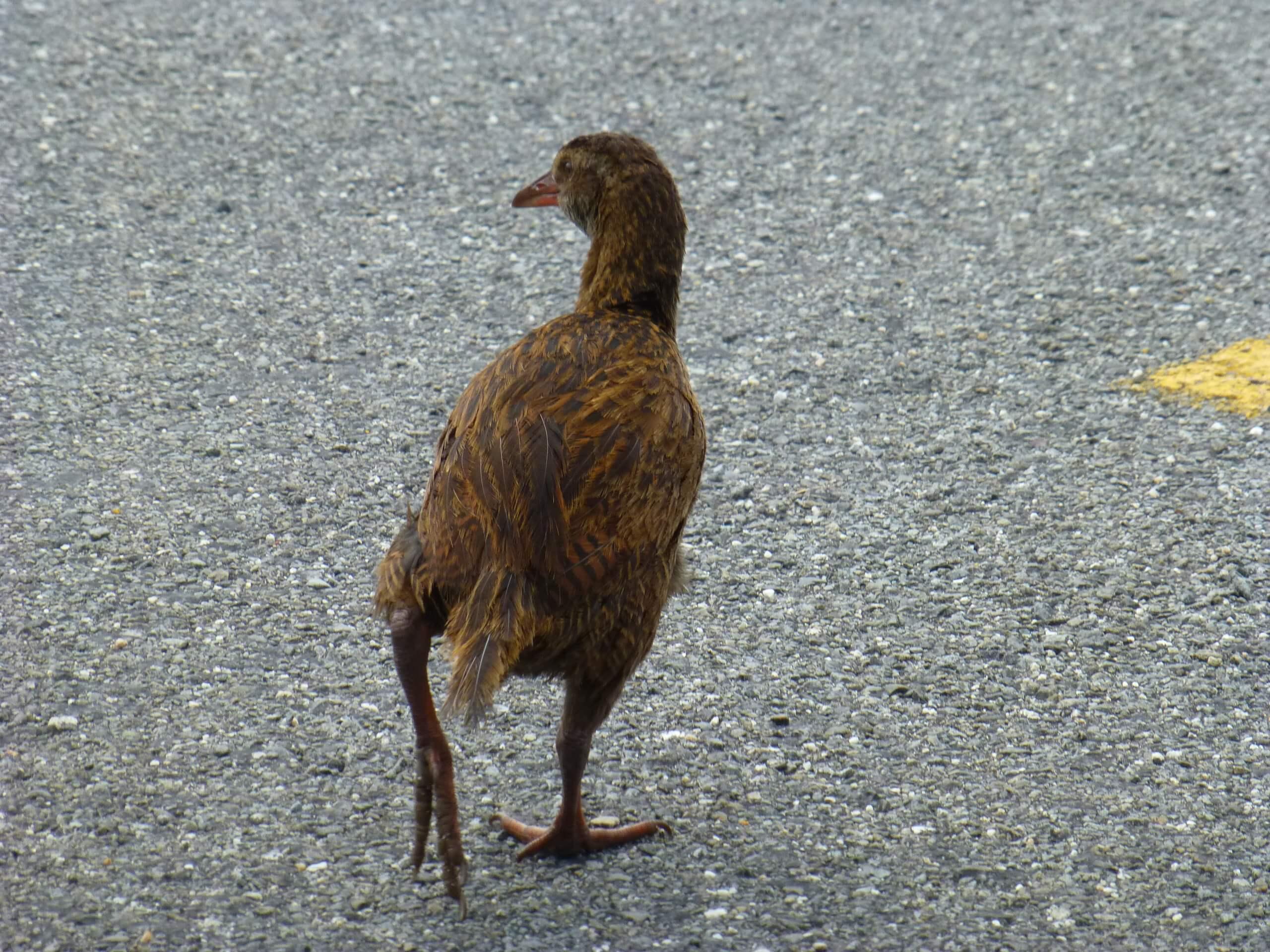 Tauranga Bay, Westküste, NZ 16