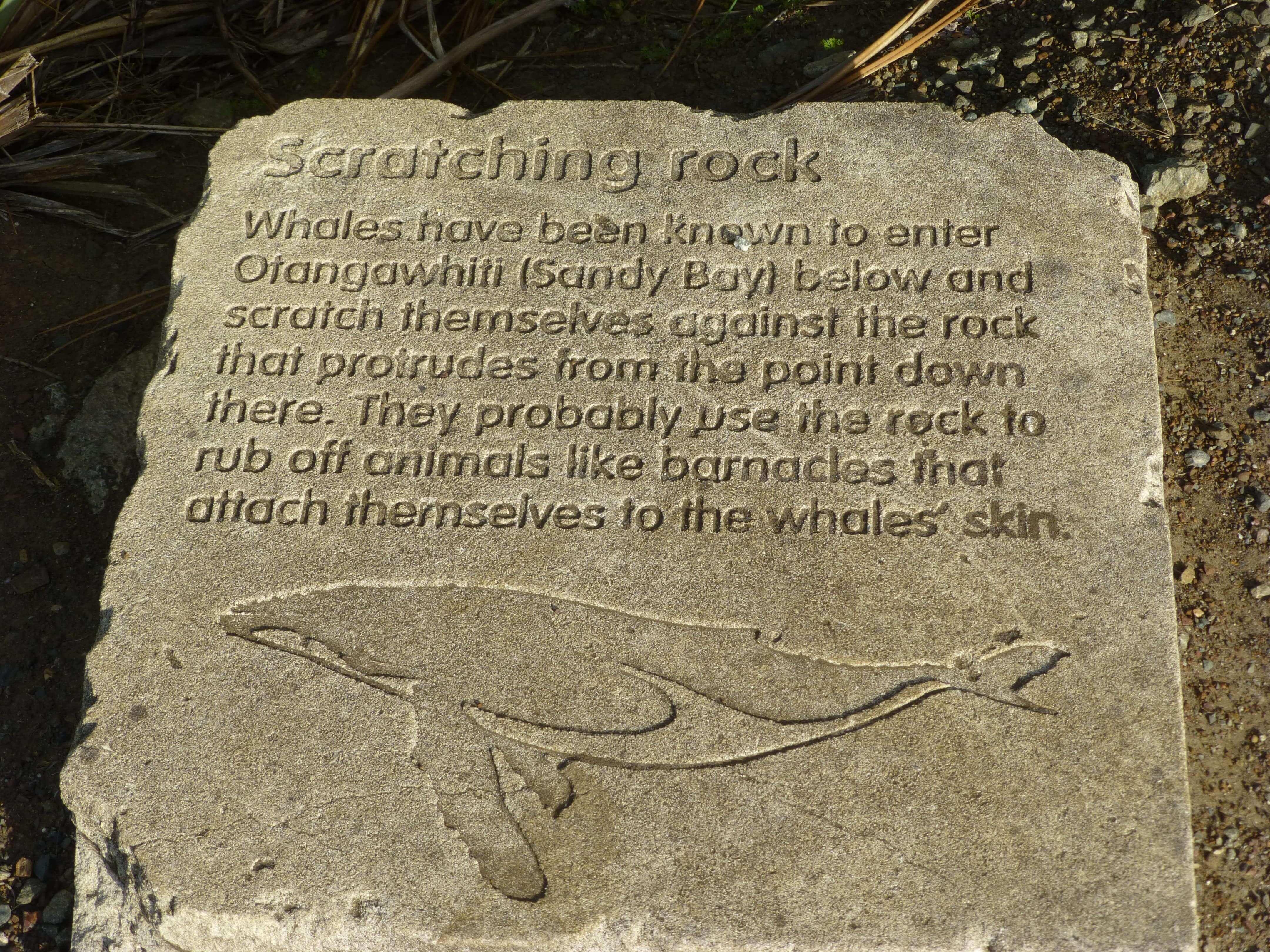 Infotafeln am Cape Reinga 11