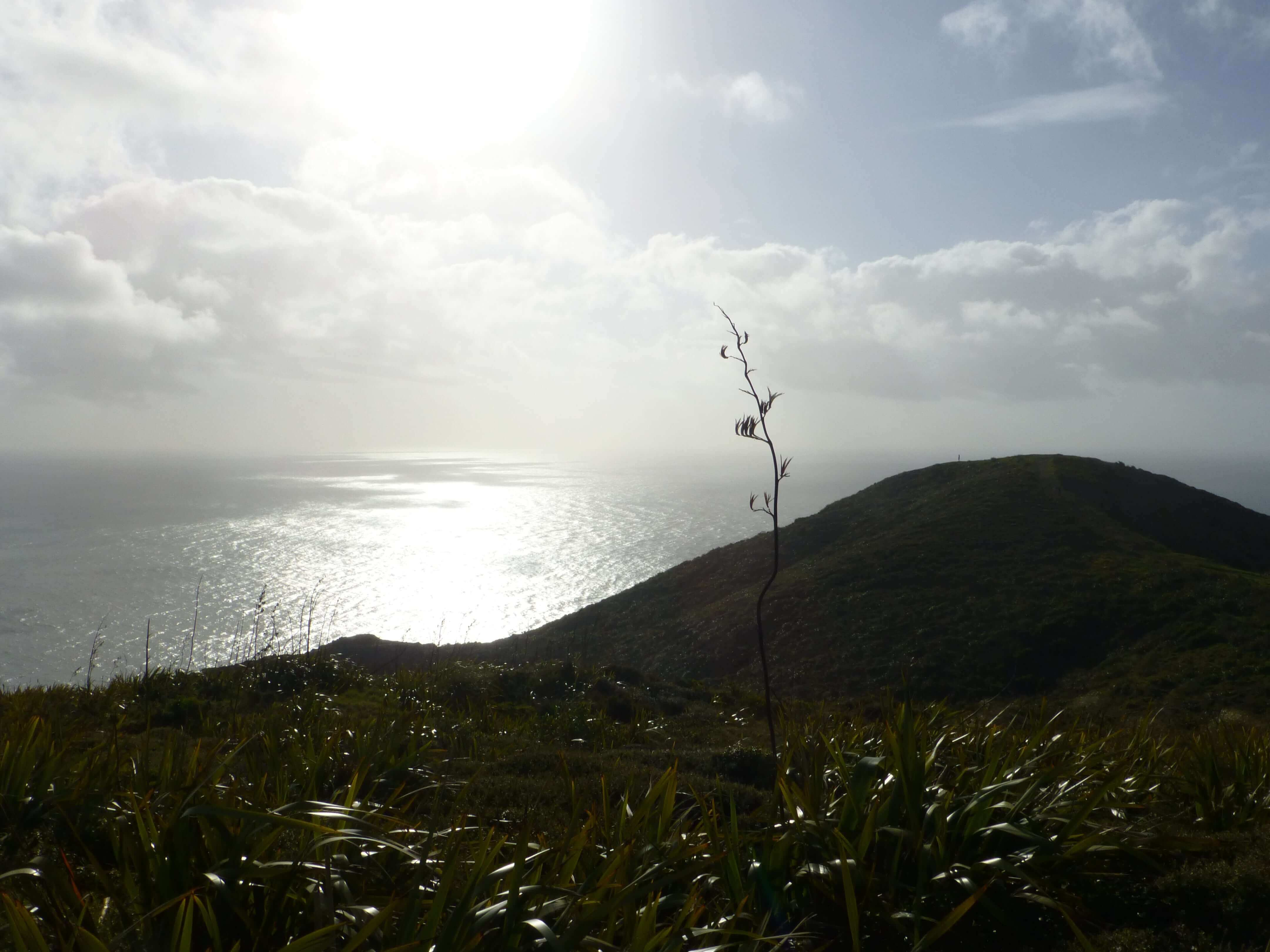 Leuchtturm am Cape Reinga 3
