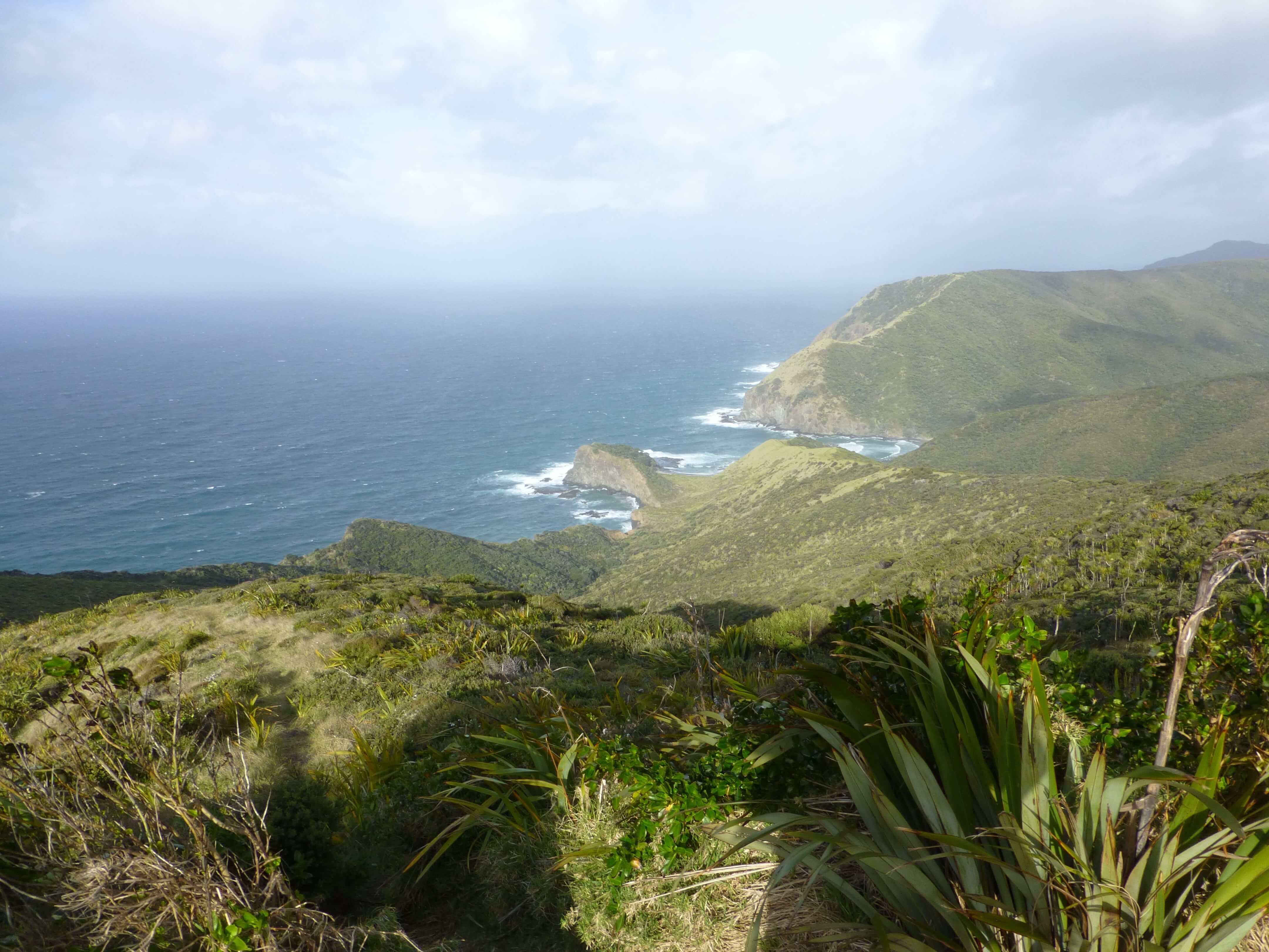 Neuseeland, am Cape Reinga 2