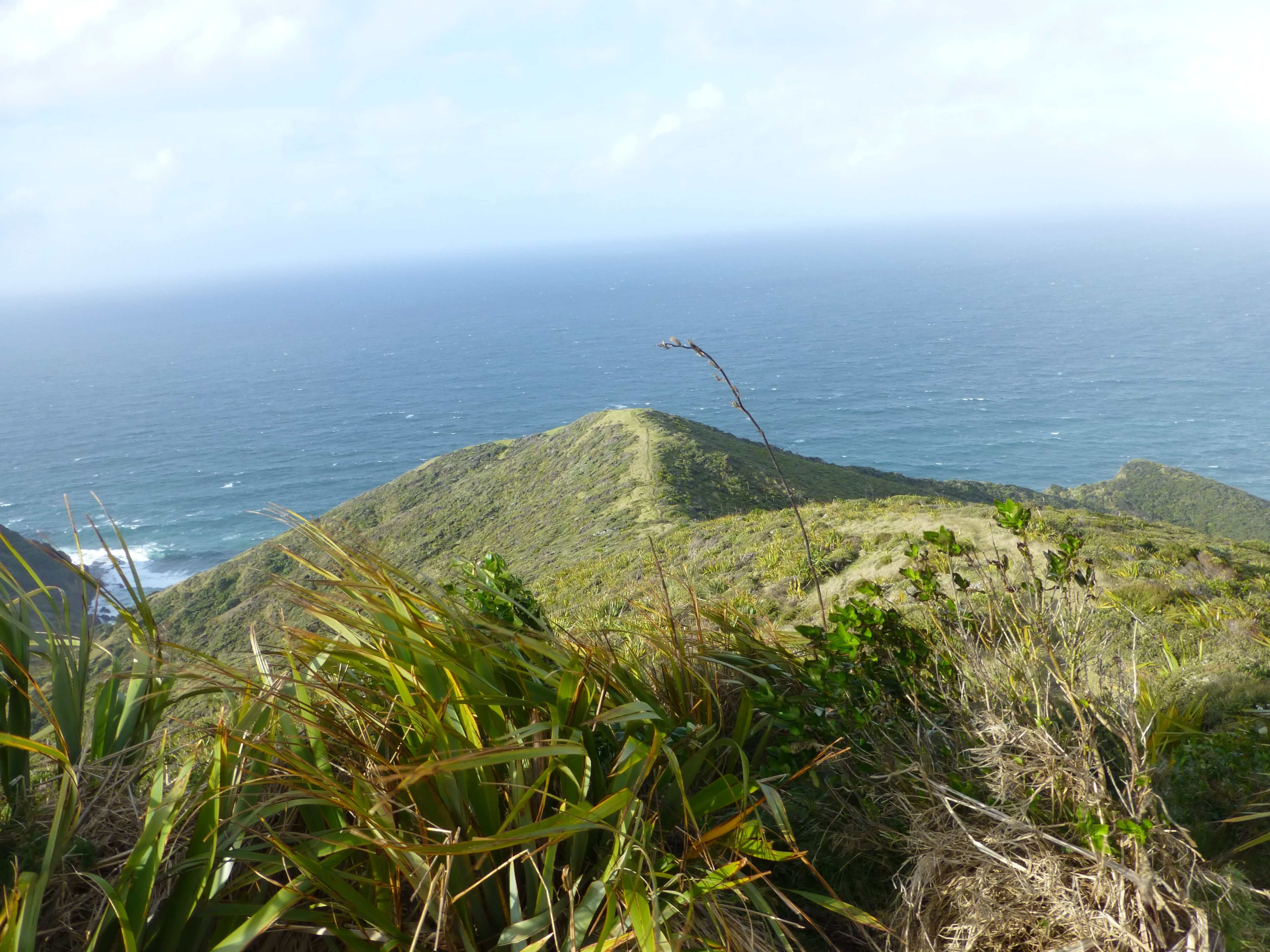 Neuseeland, am Cape Reinga 3