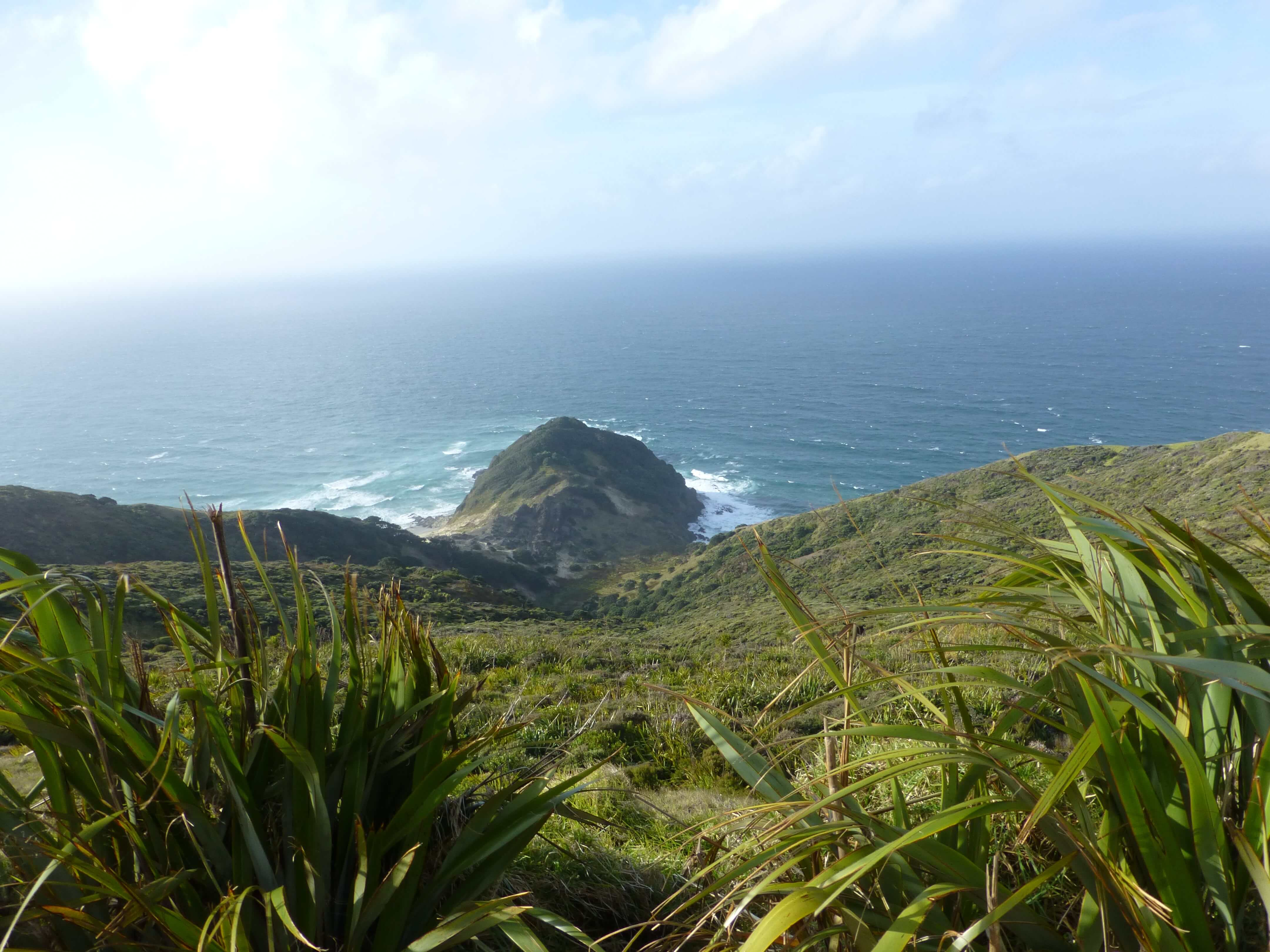 Neuseeland, am Cape Reinga 4