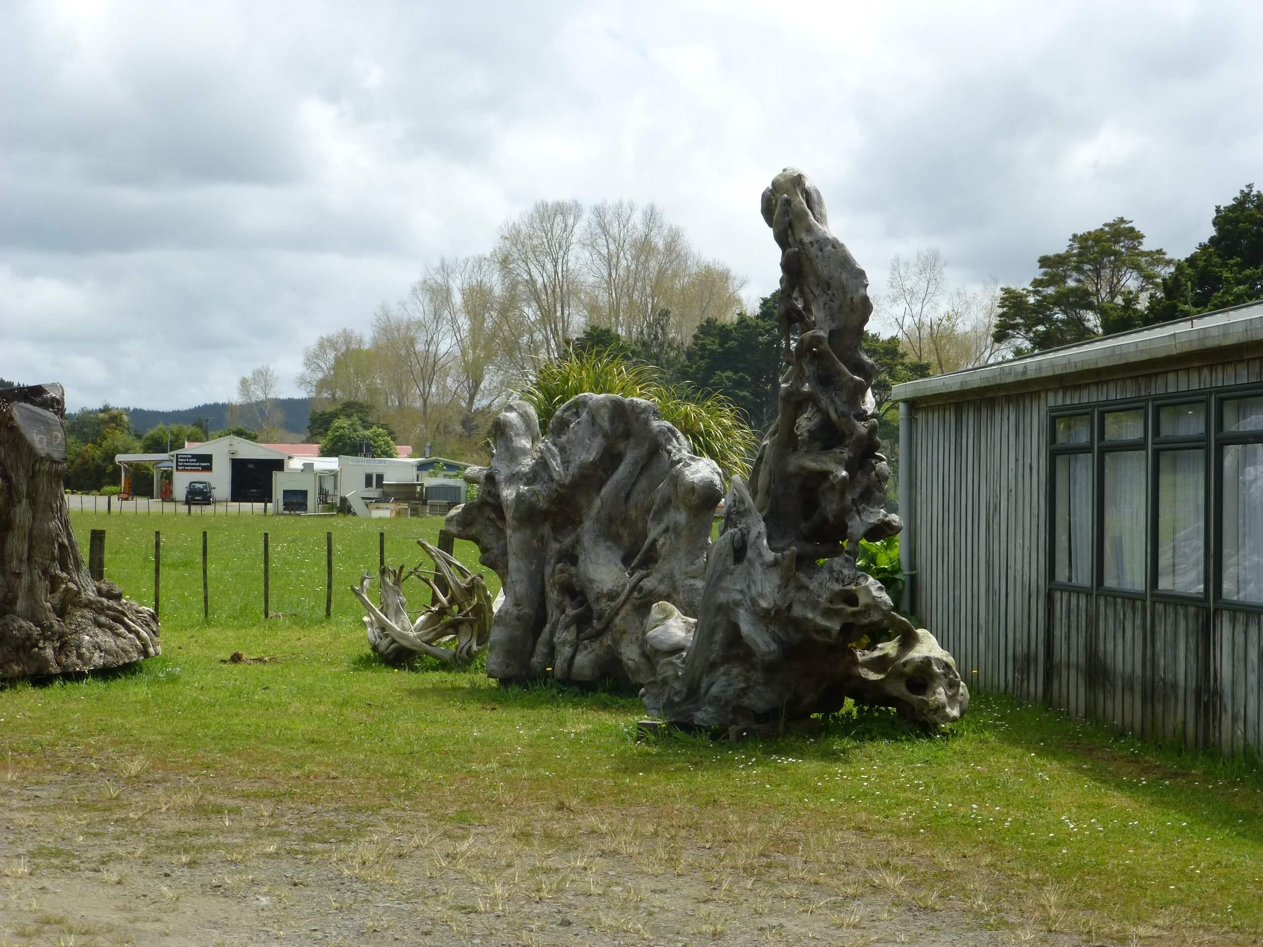 Nelson's Kaihu Kauri 16