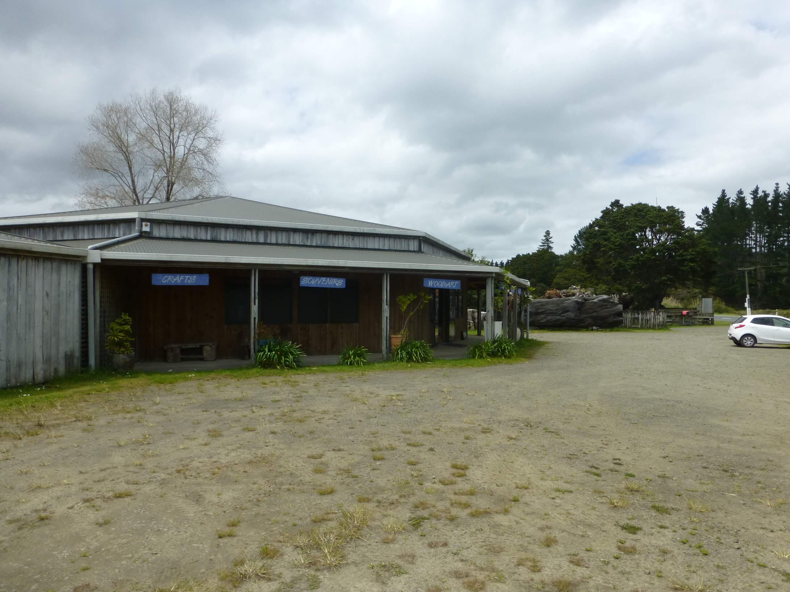 Nelson's Kaihu Kauri 19