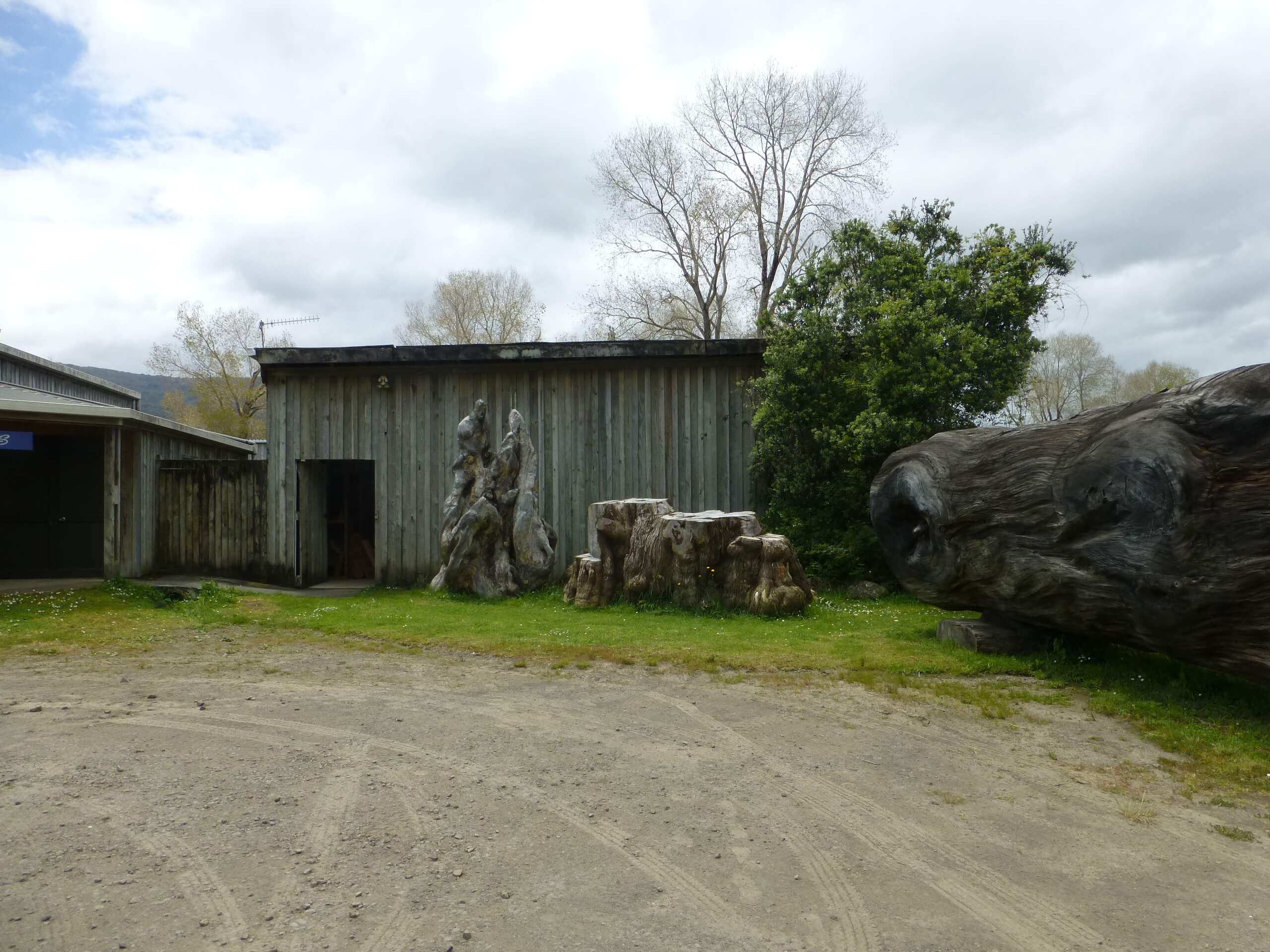 Nelson's Kaihu Kauri 2