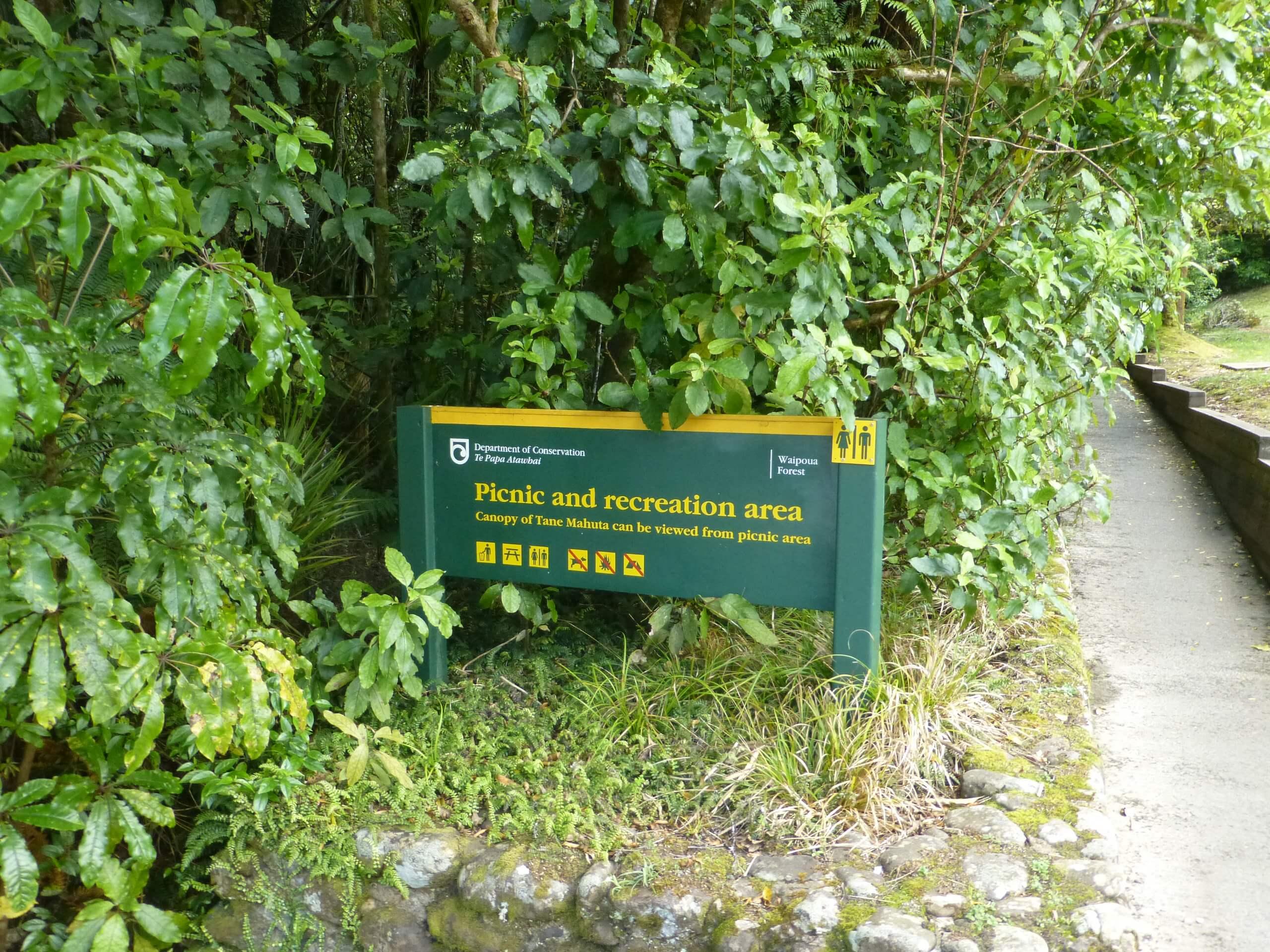 weit weg reisen, Waipoua Forest, Tane Mahuta 1