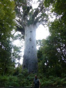weit weg reisen, im Waipoua Forest, bei Tane Mahuta 12