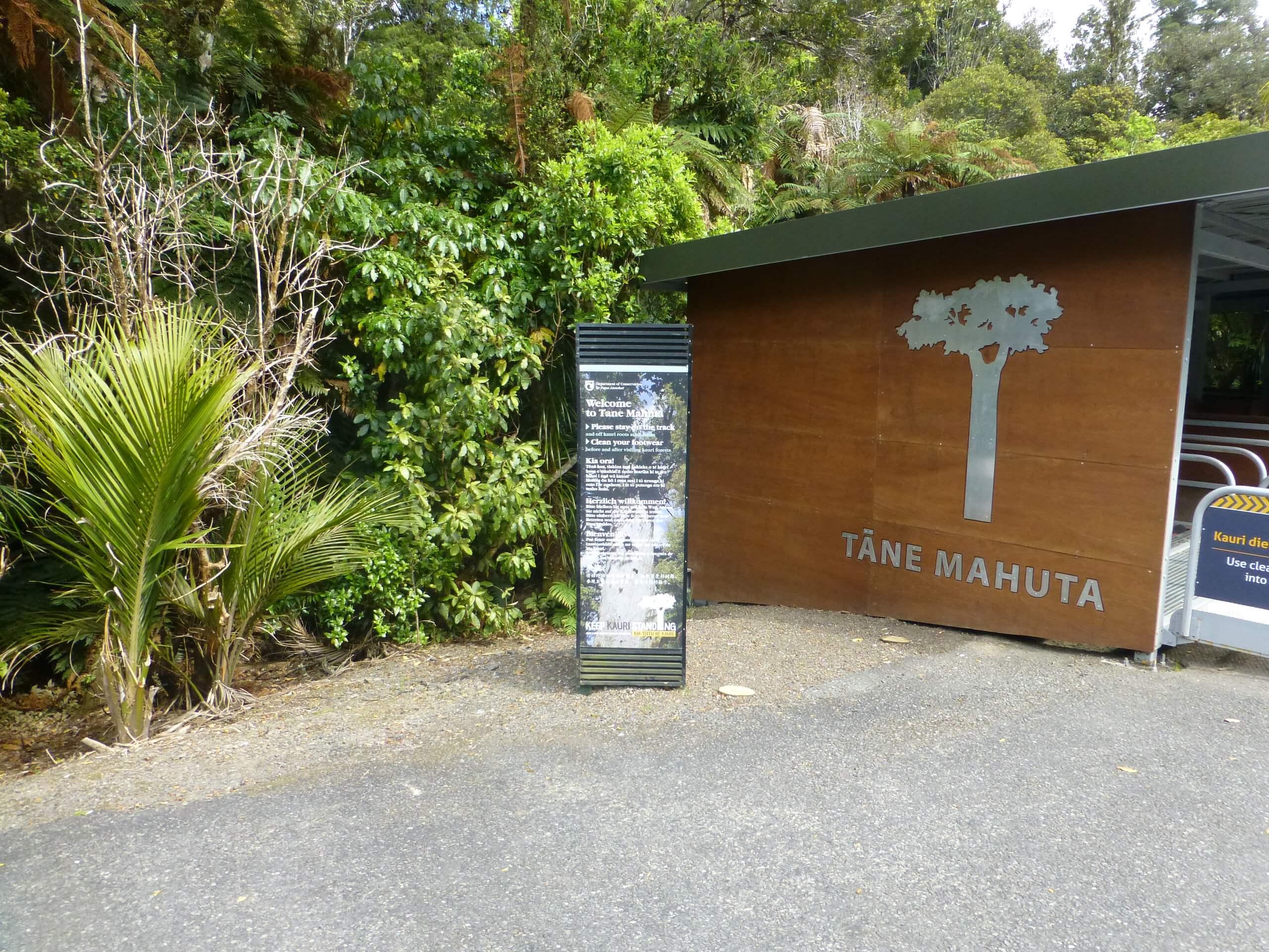 weit weg reisen, Waipoua Forest, Tane Mahuta 3