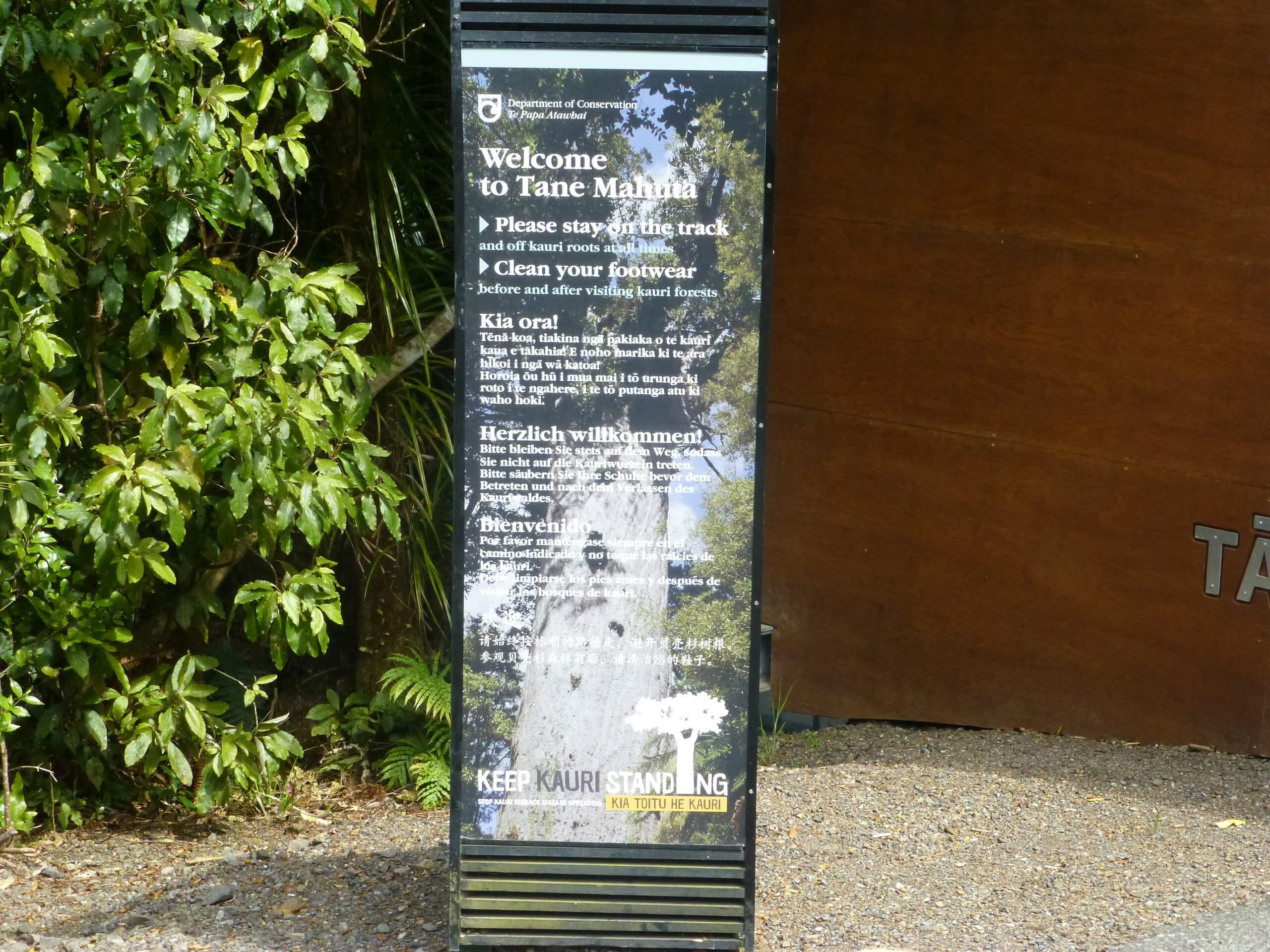 weit weg reisen, Waipoua Forest, Tane Mahuta 4