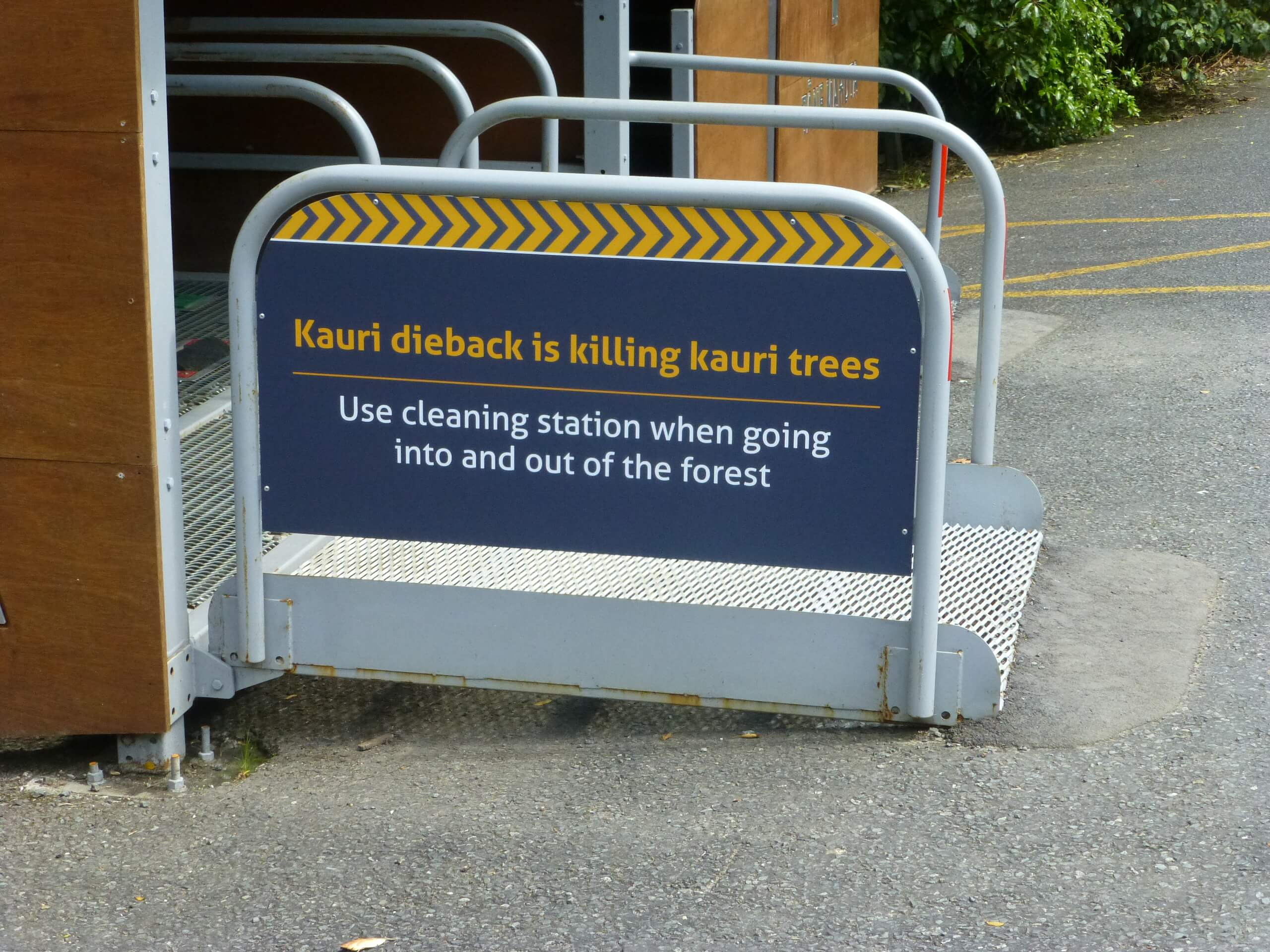 weit weg reisen, Waipoua Forest, Tane Mahuta 5