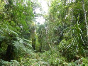 weit weg reisen, im Waipoua Forest, bei Tane Mahuta 9