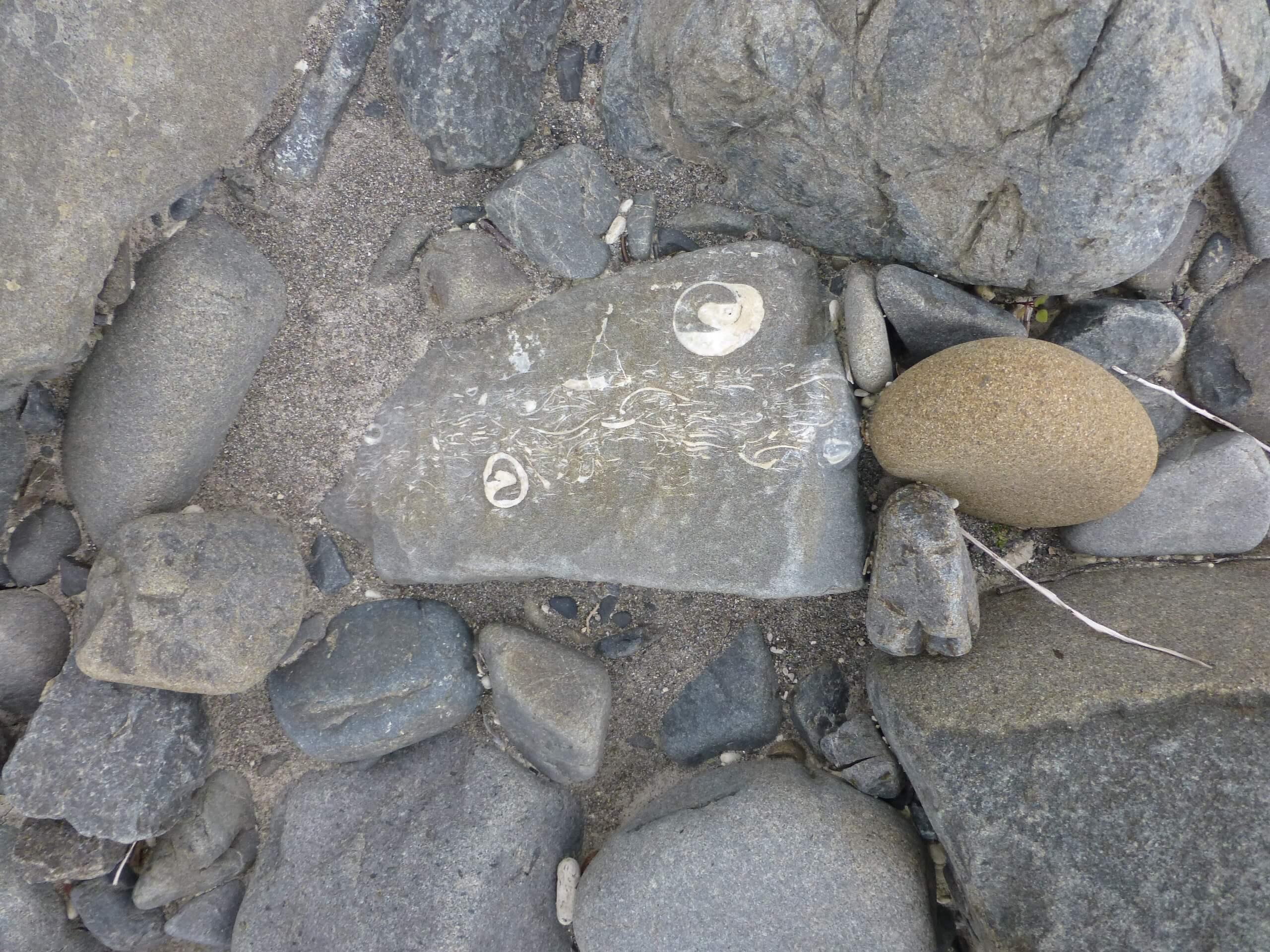 Weit weg Reisen, Fossilien am Mōhaka River, vor der Mountain Valley Adventures Lodge 5