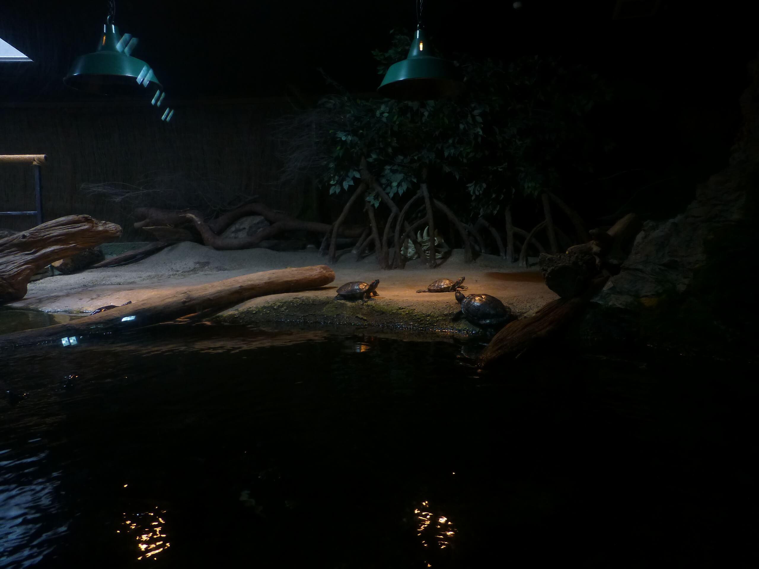Weit weg Reisen, National Aquarium, Napier 8