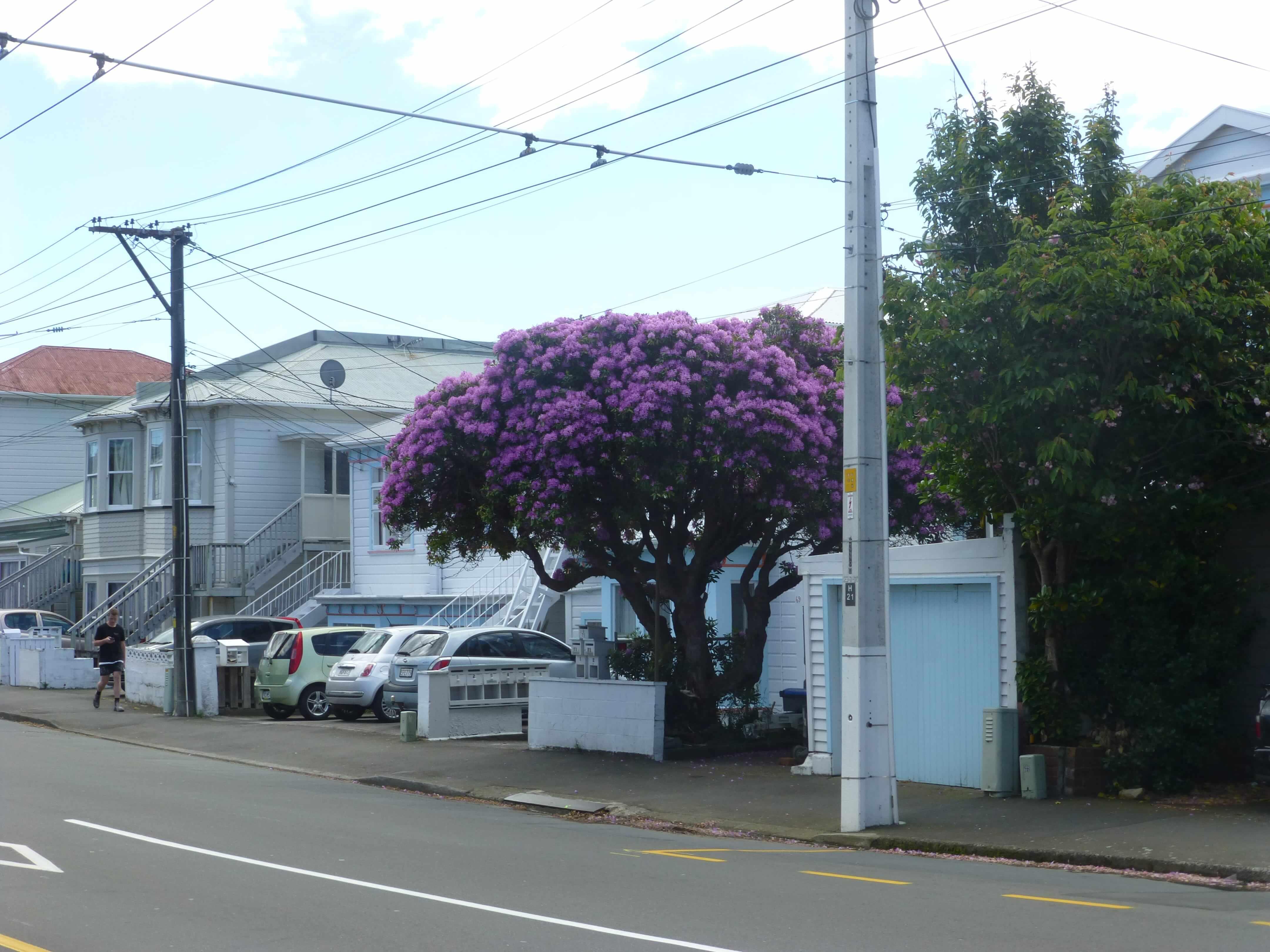 in Wellington, Neuseeland, Weit-weg.reisen 12